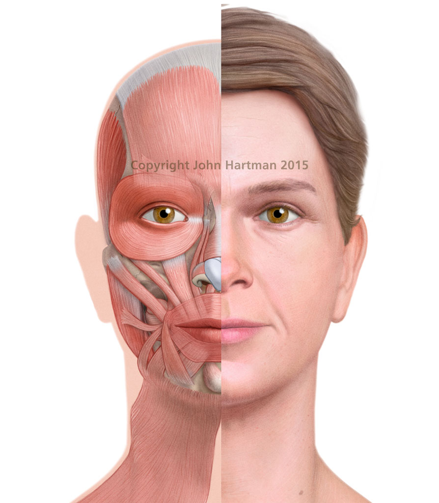 Female-Muscles-of-the-Face-Front-View | John Hartman Illustration