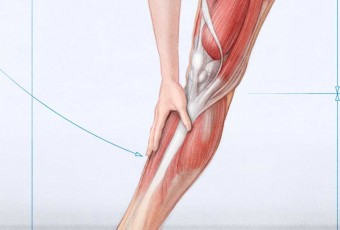 female anatomy pictures, medical art, anatomy of leg
