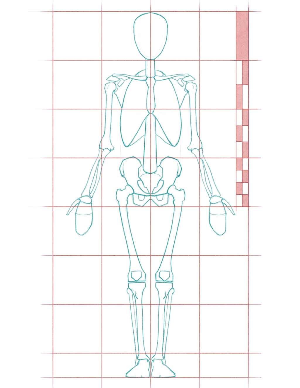 Human Proportions For Figure Drawing